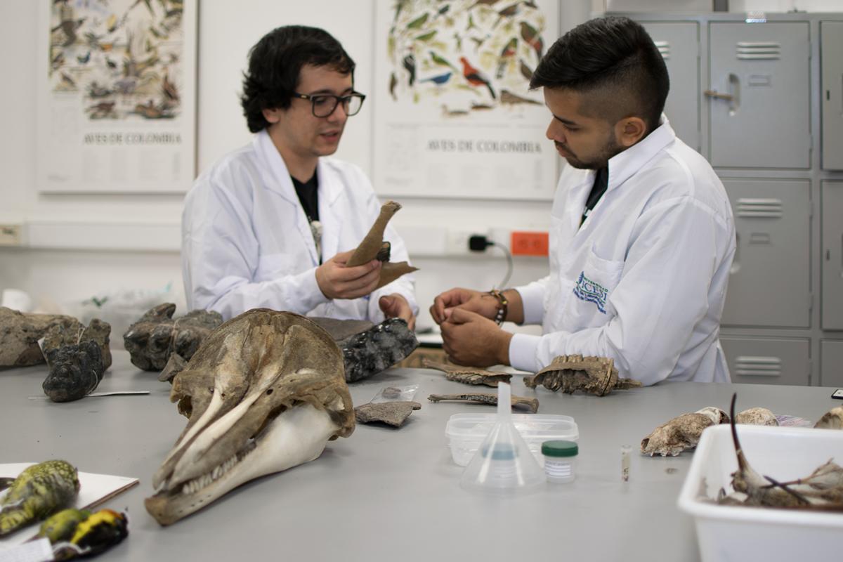 coleccion zoologica